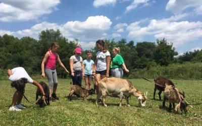 """""""Állatközelben"""" – Misinás táborok 2020. nyarán"""