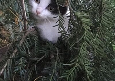 Kölyök cica, nem az állatotthon lakója